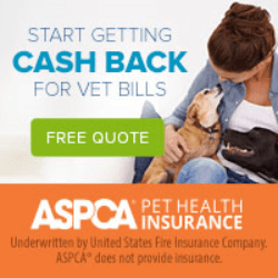 Best Pet Insurance | Most Affordable Pet Insurance