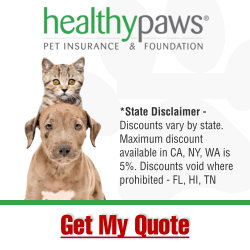 Affordable Pet Insurance Healthy Paws Manhattan Ny