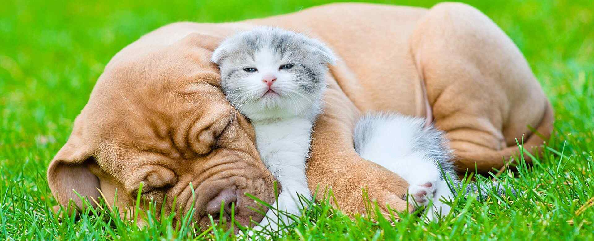 sleeping puppy hugs an adorable kitten
