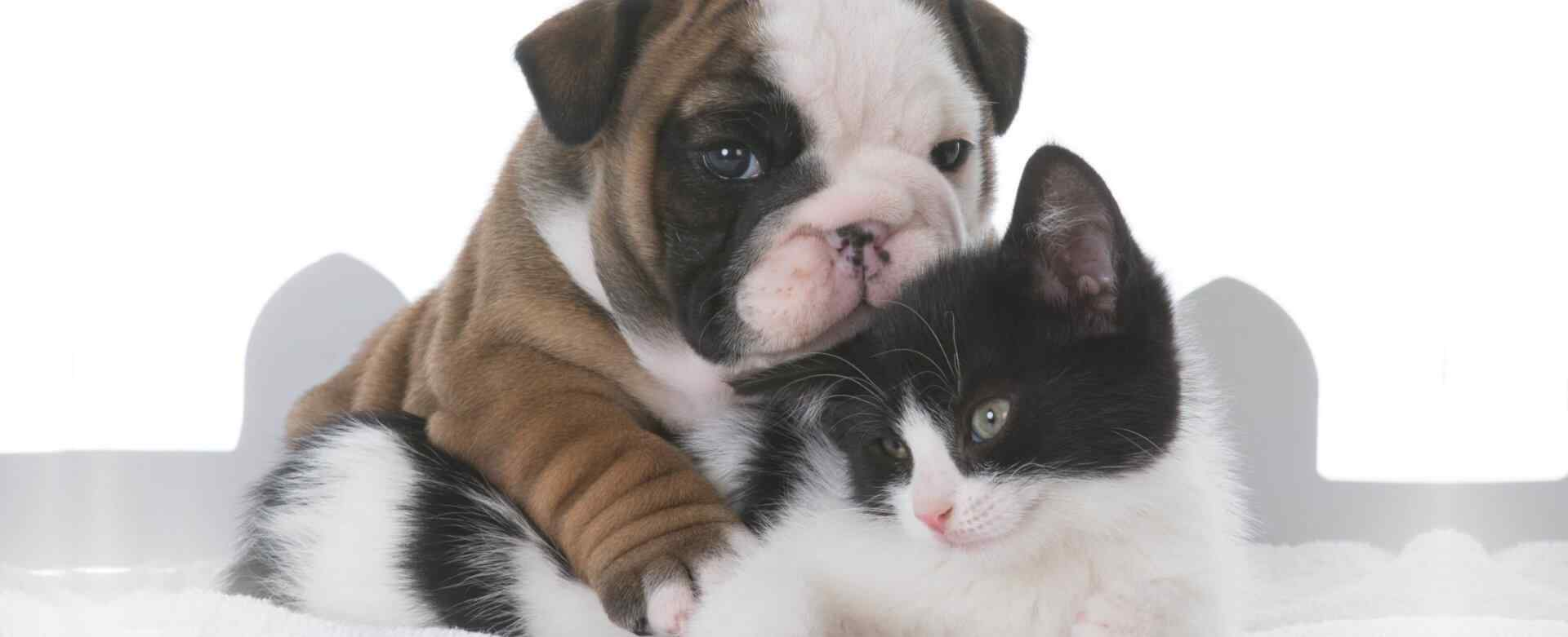 dog hugging cat