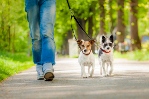 puppies walking at the park with their owner