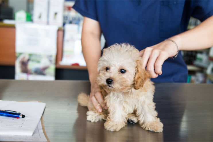 Why Should Your Dog Have Insurance?