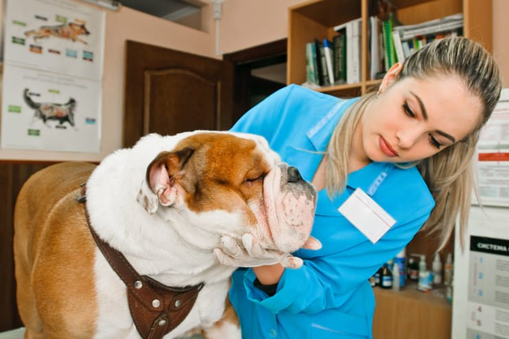 Common Health Problems Your Dogs Probably Suffer without Your Knowledge
