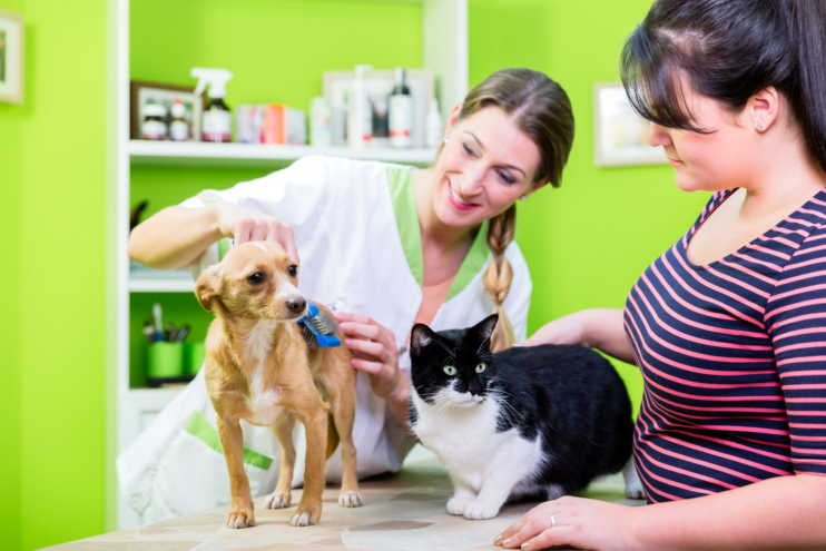 Want to Save on Your Pet's Insurance? Consider These Tips