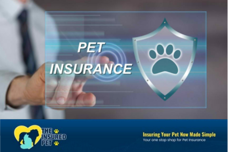 How to Choose a Reliable Pet Insurance Provider