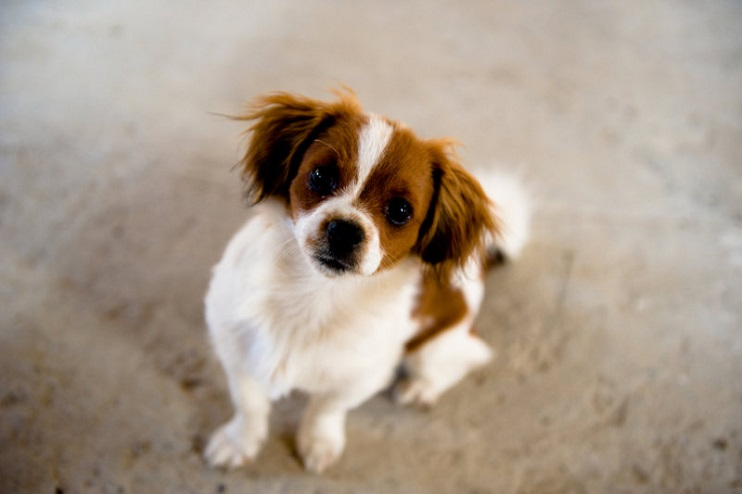 What Are Pet-Friendly Home Plants
