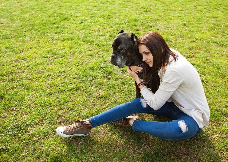 Discover the Most Common Health Problems in Older Dogs