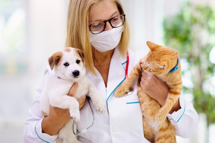 Debunking the Myths About Pet Insurance